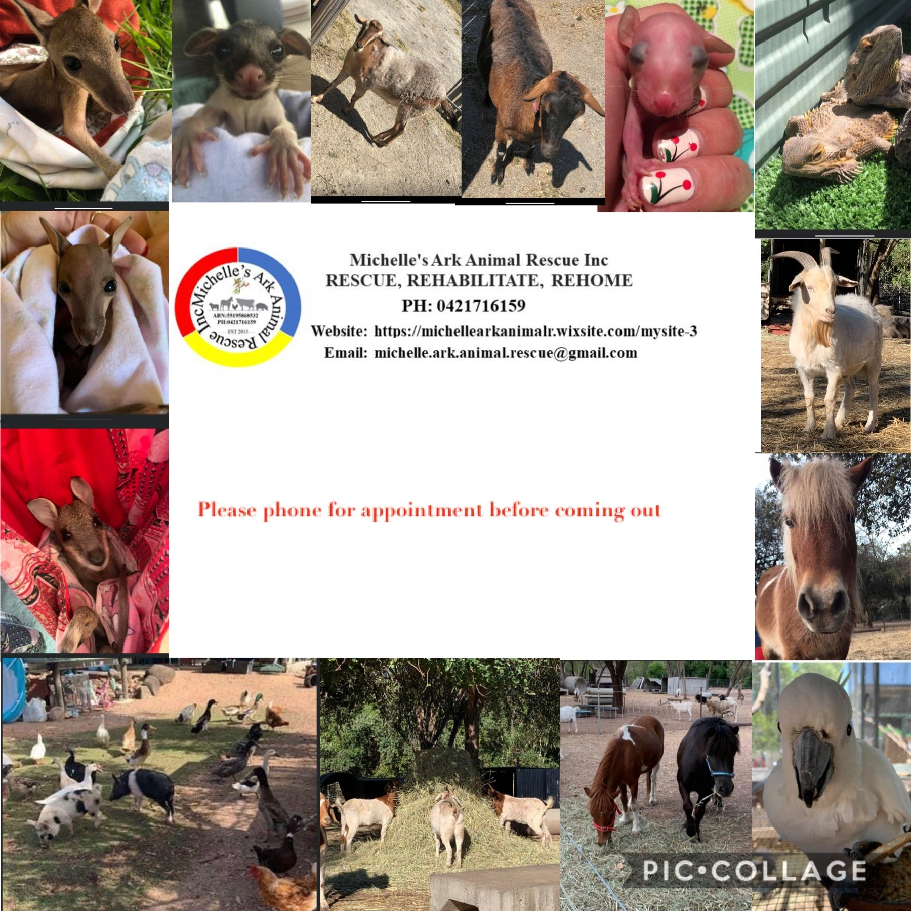 Michelle's Ark  Animal Rescue inc